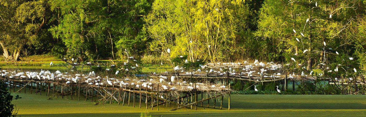 Avery Island Birds