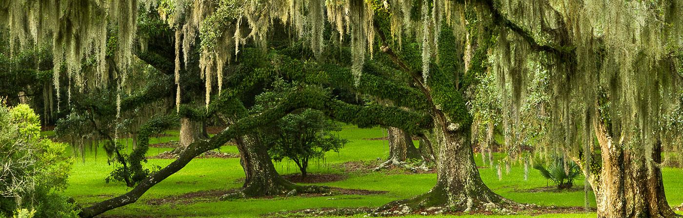 Avery Island Moss